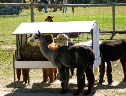 The Alpacas of the Alpacalypse