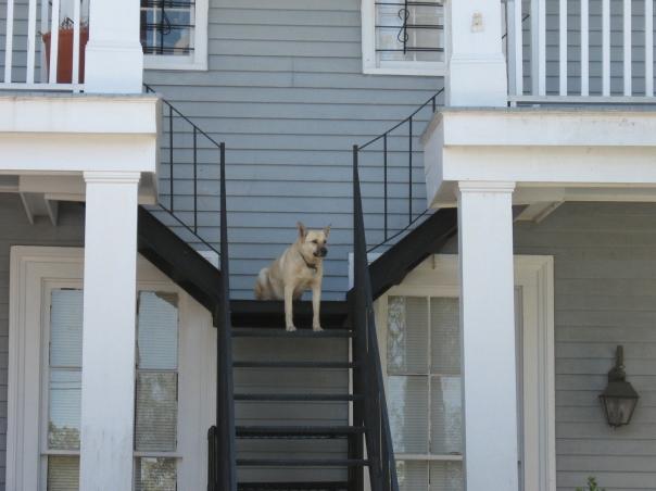 New Orleans dog, 2010