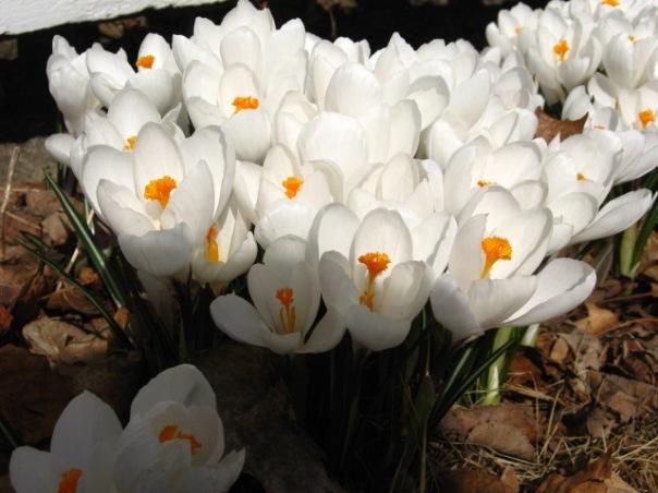 Wiscasset Spring