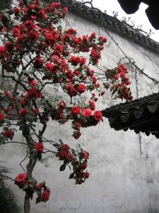 Chinese Garden, 2009