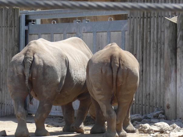 Rhino Butt Friday